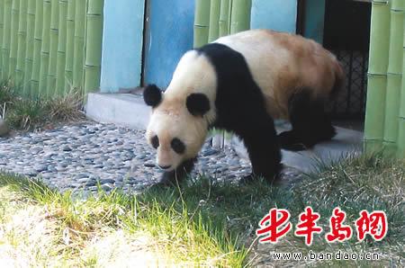 如果动物长胖了图片