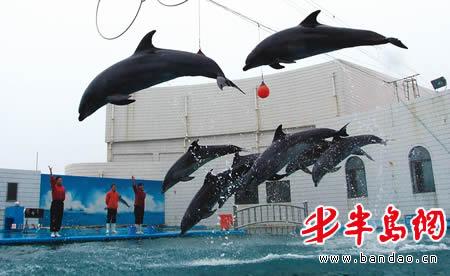 训练场,8头海豚表演明星腾空而起,在空中首次完成了集体合练科目,首次