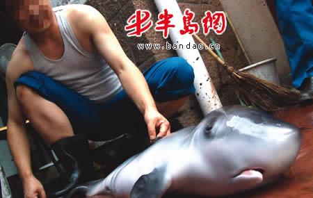 """""""8月25日中午,在青岛水族馆海洋动物解剖室,专家们进行了科学研究性"""